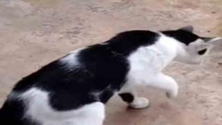 【動画】とんでもない状態のヘビに興味津々のネコちゃんw