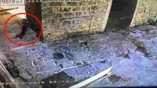 【衝撃動画】ネコが驚異的なジャンプでハトを狩る瞬間の動画。