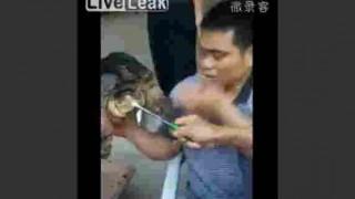 【衝撃動画】村人、半分に切った亀に眉間を噛まれる。
