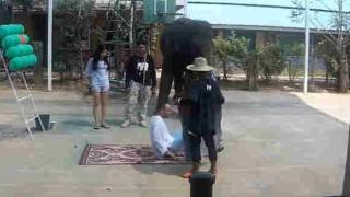 【動画】調教されているから安心と思っても怖い象さんのマッサージw