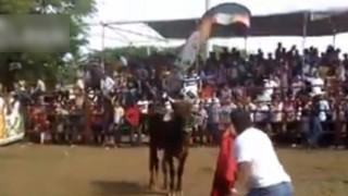 【閲覧注意】牛、たった3秒で人間を・・・(動画)
