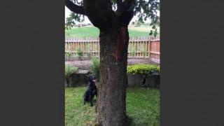 【動画】リスに弄ばれる犬www