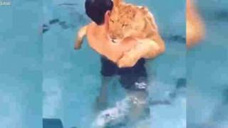 【衝撃動画】ペット?のライオンがプールでライオンかきwww