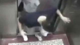 【閲覧注意】中国でまた殺人エレベーターが監視カメラに映る…。