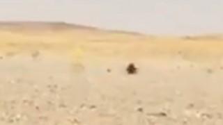 【※笑撃】クッソ暑いサウジの砂漠でダッシュしてくる生物。(動画)