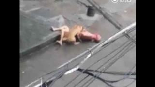 【閲覧注意】街中で狂犬に襲われ血だらけになる男性。