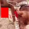 【動画】ペニスをヘビに噛まれたままどうすることもできない犬。