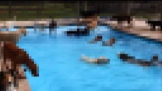 【動画】全員素っ裸で入り乱れてる野性的なプールパーティー初めてみたw