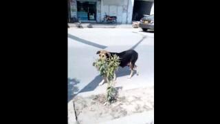 """【閲覧注意】街中で見かけた野良犬が咥えている """" モノ """" が恐ろしすぎる。"""