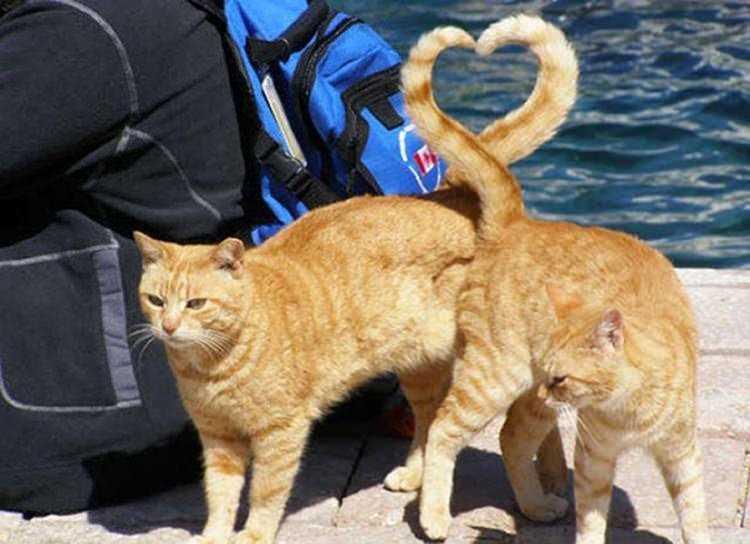 ネコが尻尾でハートマーク