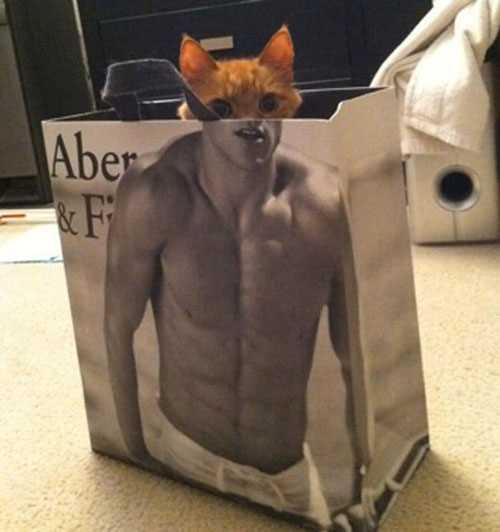 紙袋から顔を出してるネコ