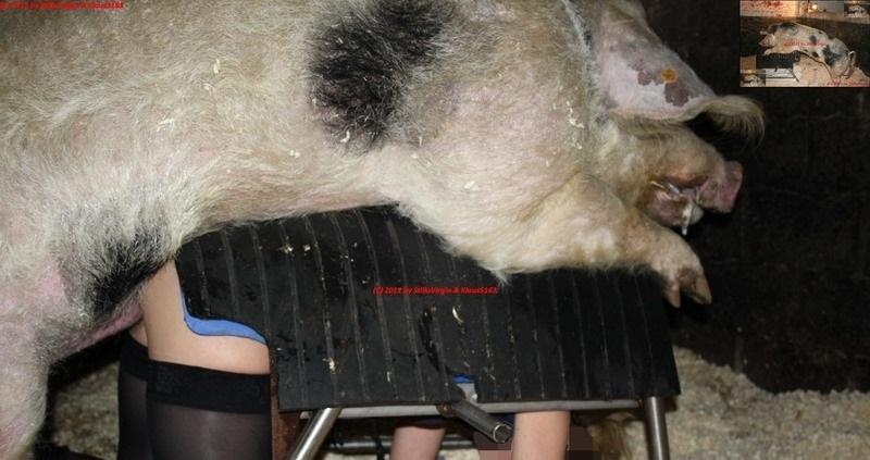 【閲覧注意】豚に人間の女性をレ●プさせたらこうなる(画像)