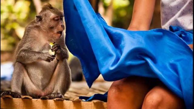 スカートの中を覗くお猿さん