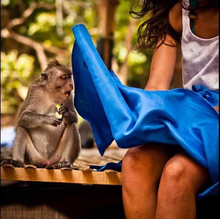 風で舞い上がったスカートの中を覗くお猿さん