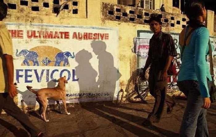 偶然、男女がキスしているように見える影をみる犬