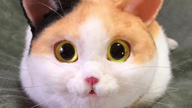"""ロシア人「日本で売っている""""猫バッグ""""がマジでヤバ過ぎる」 海外の反応"""