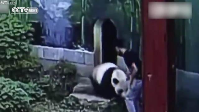 パンダに触ろうとする男性