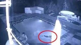 【衝撃】カップルがホテルのプールで泳いでたらとんでもないヤツが現れる・・・(動画)