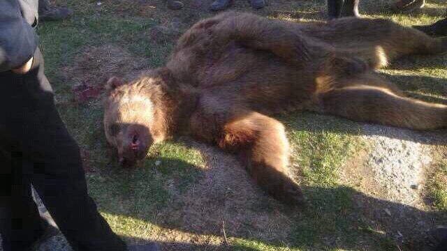【閲覧注意】クマに襲われ死亡した人物の写真が流出 ⇒ マジで見ない方がいい…