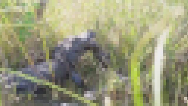 【動画】4メートルのワニと5メートルのニシキヘビの対決動画。